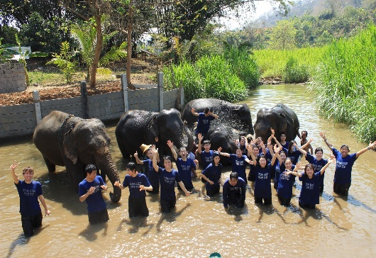 """Visit Elephant Camp"" activity"